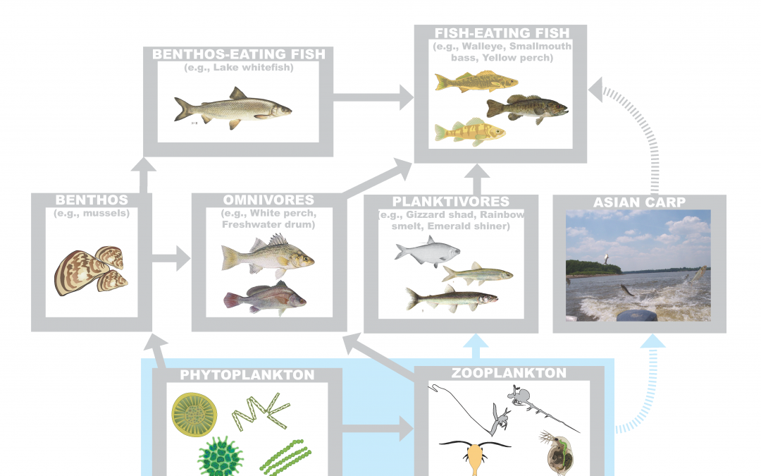 New Asian carp study released